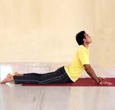 Yoga Asana – Cobra Posture