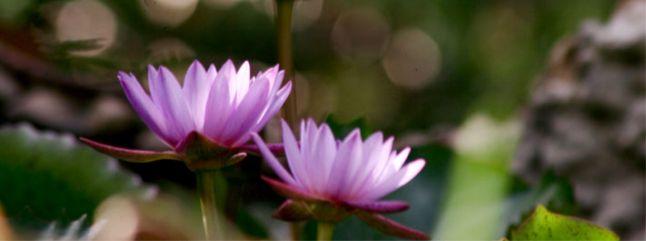 Yoga Sutras de Patanjali - Osho