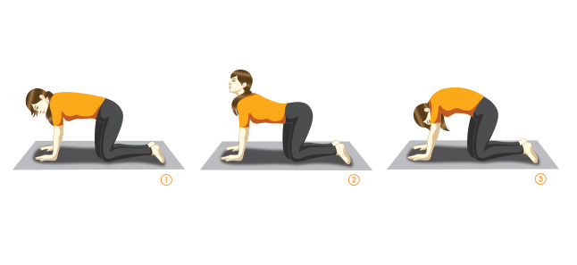Marjariasana (Cat-stretch Pose) sequence for senior early beginners