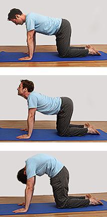 Cat Stretch Yoga Pose - Marjariasana Yoga pose